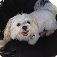 Adopt A Pet :: RORI - Los Angeles, CA