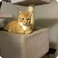 Adopt A Pet :: Thomas - Medford, NY
