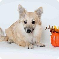 Adopt A Pet :: Selwyn - Lomita, CA