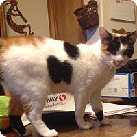 Adopt A Pet :: Moana - Eureka, CA