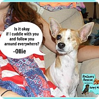 Adopt A Pet :: Ollie - Greenwood, LA