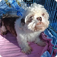 Adopt A Pet :: hershe - Crump, TN