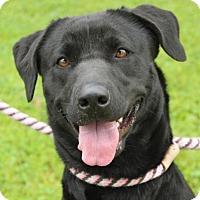 Adopt A Pet :: TRINITY - Red Bluff, CA
