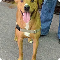 Adopt A Pet :: Indy - Spring Valley, NY