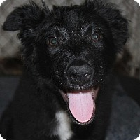 Adopt A Pet :: Charger - Savannah, MO