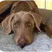 Adopt A Pet :: Cooper - Eustis, FL