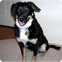 Adopt A Pet :: COURTESY-Charli - Scottsdale, AZ