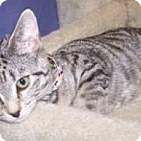 Adopt A Pet :: K-Psyche4-Pounce - Colorado Springs, CO