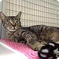 Adopt A Pet :: Brandy - Winter Haven, FL