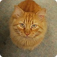 Adopt A Pet :: Robin - Naples, FL