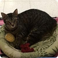 Adopt A Pet :: Jodi - Byron Center, MI