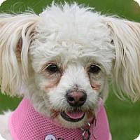 Adopt A Pet :: Piper - La Costa, CA