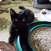 Adopt A Pet :: Marlie - Xenia, OH