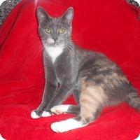 Adopt A Pet :: Pebbles - McConnells, SC