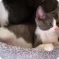 Adopt A Pet :: Earl - Phoenix, AZ
