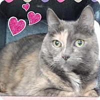 Adopt A Pet :: Cleopatra - Arlington/Ft Worth, TX