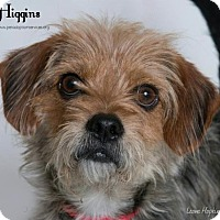 Adopt A Pet :: Higgins - Kenner, LA