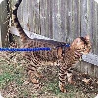 Adopt A Pet :: Ferguson - Long Beach, NY
