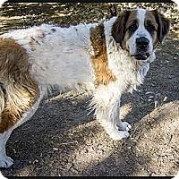 Adopt A Pet :: Bernadette - Glendale, AZ