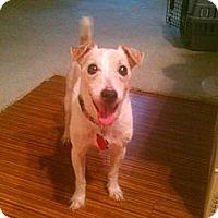 Adopt A Pet :: Casey in Houston - Houston, TX