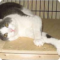 Adopt A Pet :: Molly & SweetPea - Cincinnati, OH