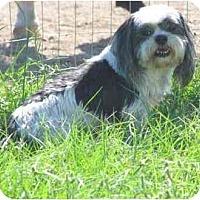 Adopt A Pet :: Kippy (Adopted!) - Houston, TX