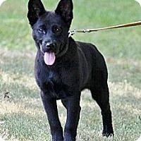 Adopt A Pet :: Summer - Rigaud, QC