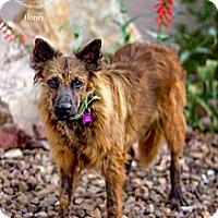 Adopt A Pet :: HONEY - Phoenix, AZ
