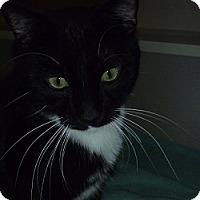 Adopt A Pet :: Baxter - Hamburg, NY