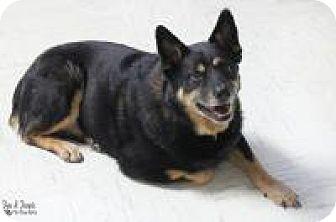 Australian Cattle Dog Mix Dog for adoption in Yukon, Oklahoma - Lennie
