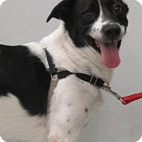 Adopt A Pet :: Walker - Conroe, TX