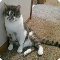Adopt A Pet :: FOSTER NEEDED: KiKi and Lucas - Rochester, MI