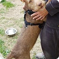Adopt A Pet :: Solo - Freeport, NY