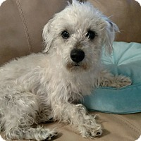 Adopt A Pet :: BC (see note) - Mary Esther, FL