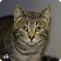 Adopt A Pet :: Hermi - Ottumwa, IA