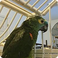Adopt A Pet :: Sugar - Punta Gorda, FL