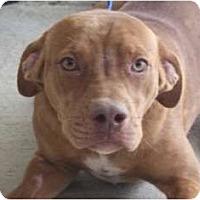 Adopt A Pet :: Noah - URGENT FOSTER NEEDED - Seattle, WA