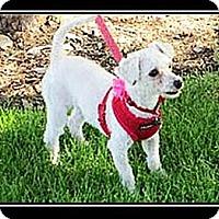 Adopt A Pet :: Bella - Fort Braff, CA