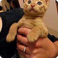 Adopt A Pet :: Rowdy - Ft. Lauderdale, FL