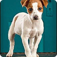 Adopt A Pet :: Ariel - Owensboro, KY