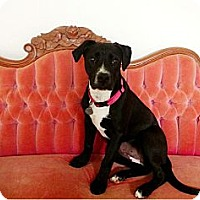 Adopt A Pet :: Kia - Hagerstown, MD
