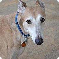 Adopt A Pet :: Boulder (Shata Boulder) - Chagrin Falls, OH