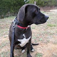 Adopt A Pet :: Malinda - Oakland, AR