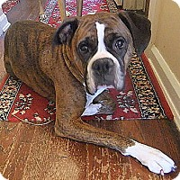 Adopt A Pet :: Silly Lilly - Dayton, OH