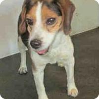 Adopt A Pet :: Buster Brown - Canoga Park, CA