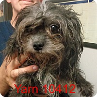 Adopt A Pet :: Yarn - Greencastle, NC