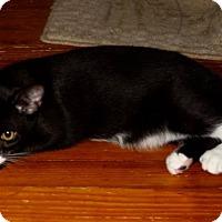 Adopt A Pet :: Tigger - Saint Augustine, FL