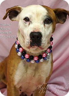 Pit Bull Terrier Mix Dog for adoption in Newnan City, Georgia - Sabrina