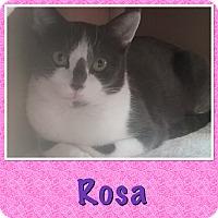 Adopt A Pet :: Rosa - Cedar Springs, MI