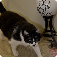 Adopt A Pet :: Bubba - Medina, OH